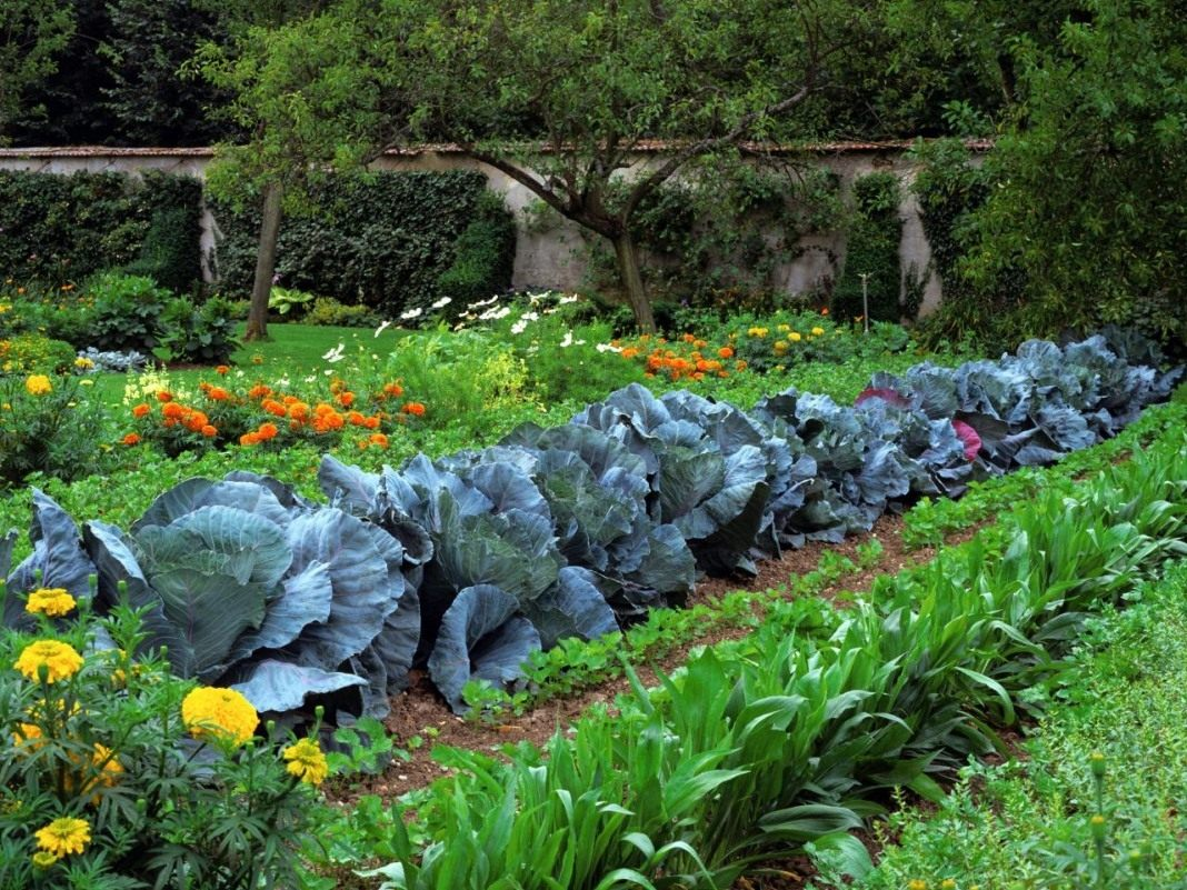 Что спасет комнатное растение от вредителей Инсектициды