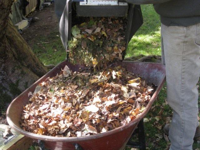 Сбор и подготовка опавшей листвы к компостированию