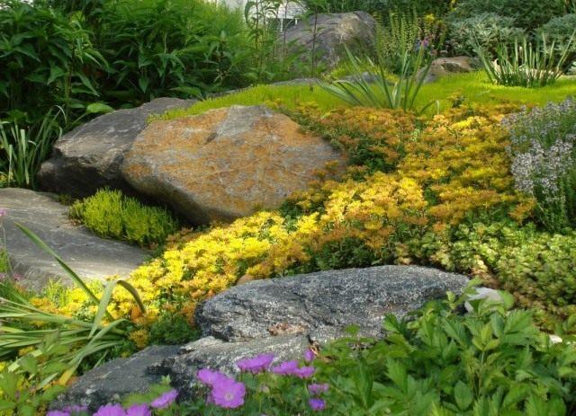 Цветник из желтых седумов