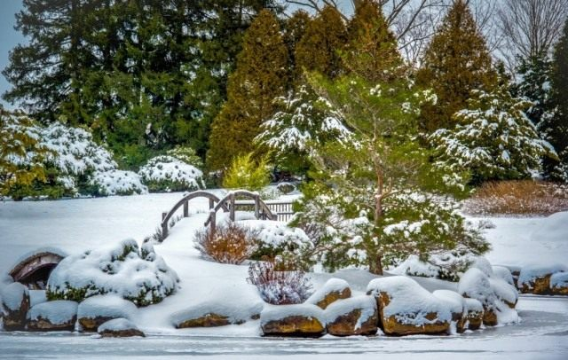 Сад в декабре