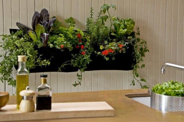 Растения в кухне