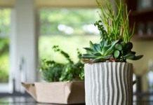 8 лучших комнатных растений для кухни