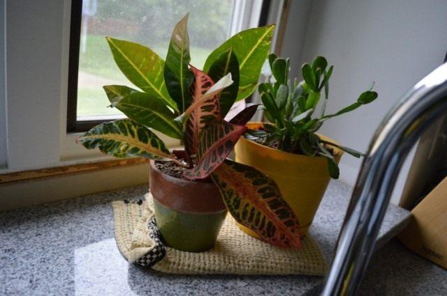 Комнатные растения в кухне