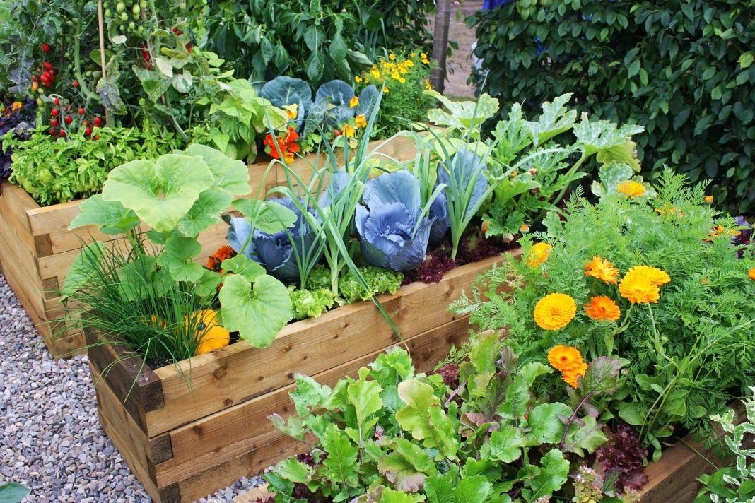 Хочу сад огород