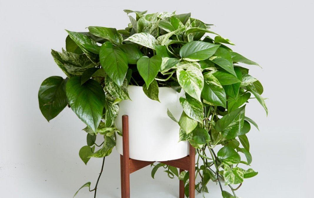 список с фото комнатных растений