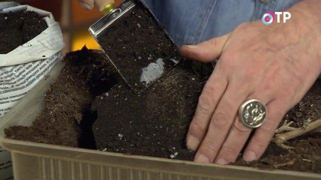 Засыпаем почву и уплотняем её вокруг кома