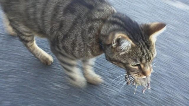 Ядовитые ловушки для грызунов могут быть опасны для домашних животных