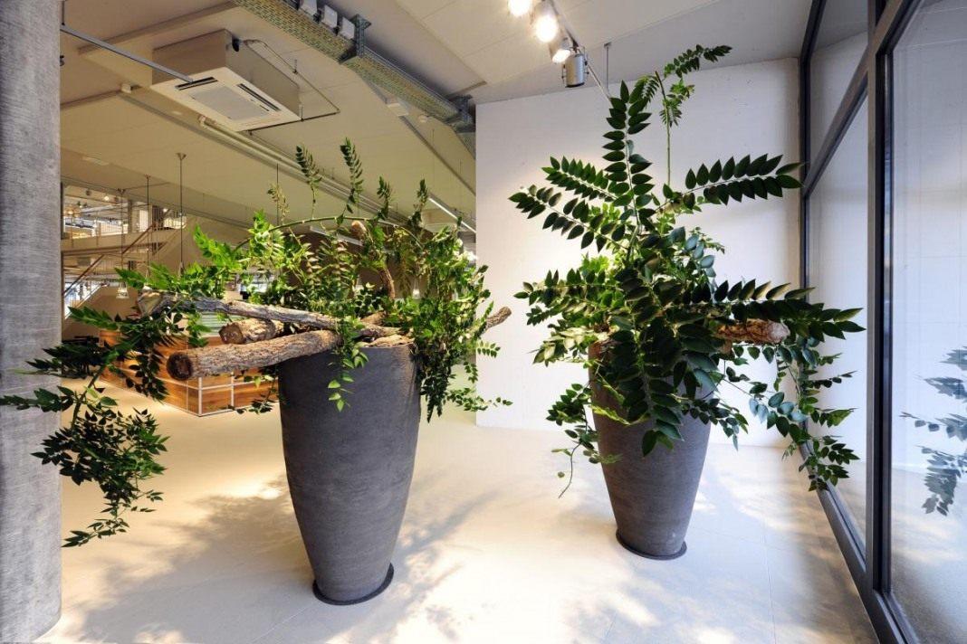 растения для офиса фото и названия