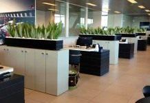 Лучшие неприхотливые растения для офиса