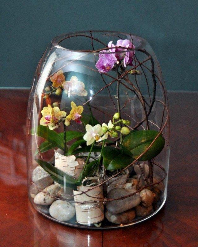 Орхидеи в террариуме
