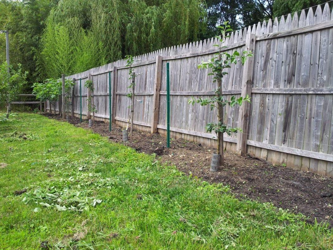 Как посадить фруктовый сад своими руками