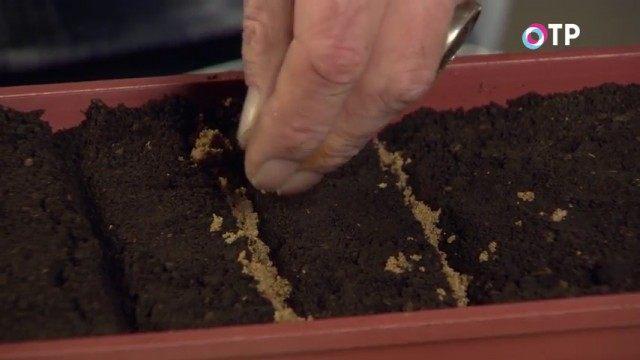 Присыпаем канавки речным песком