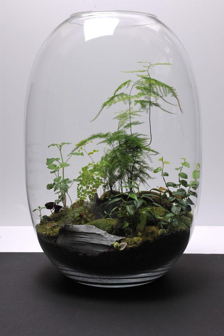 Выбираем растения для флорариума. Какие растения посадить в террариуме? Список, фото - Ботаничка.ru