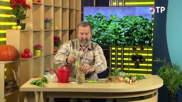 Размещаем растение в банке