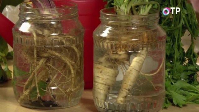 Петрушка и сельдерей в банках с водой