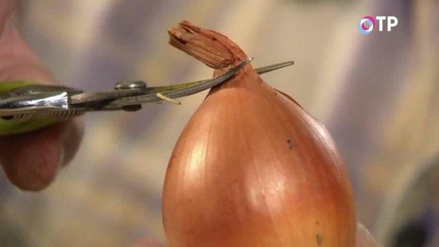 Срезаем вершинку луковички