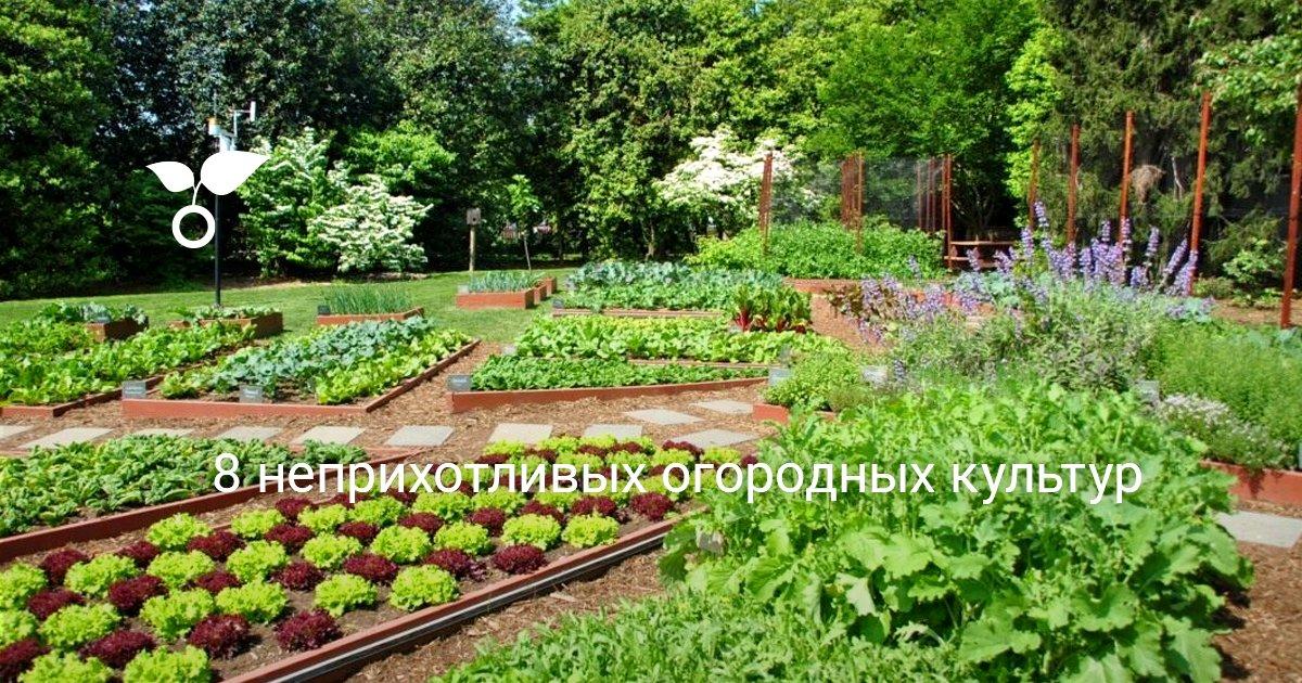 Какие культуры посадить на огороде