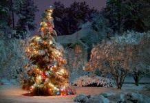 Украшение сада на новогодние праздники