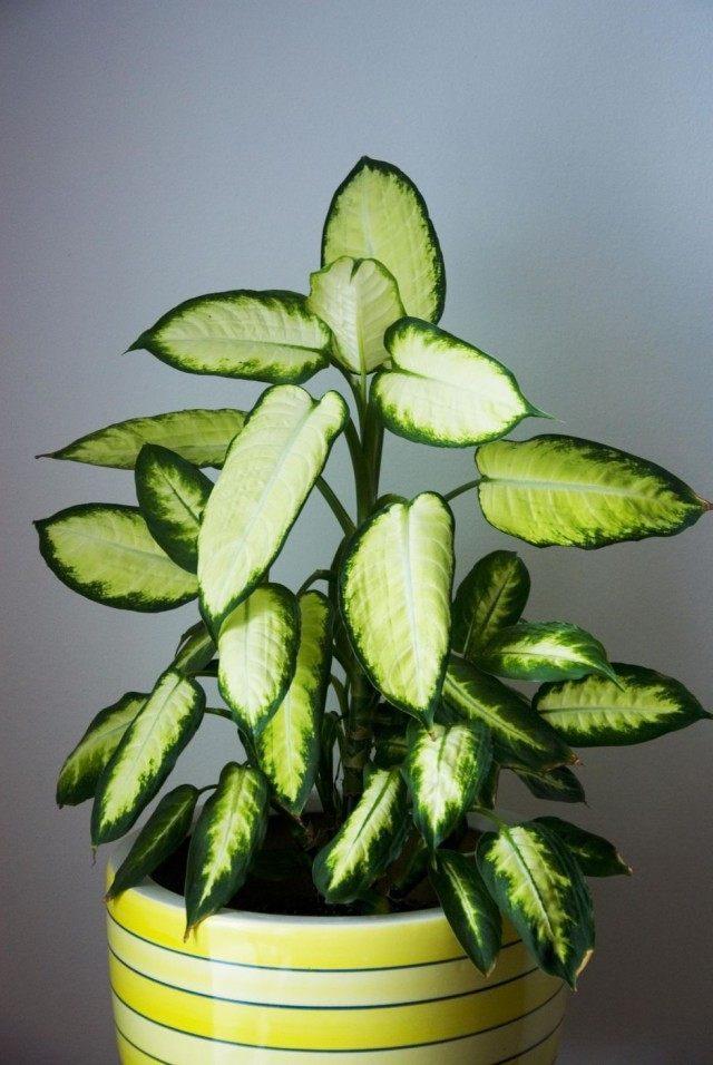 купить семена комнатных экзотических растений почтой