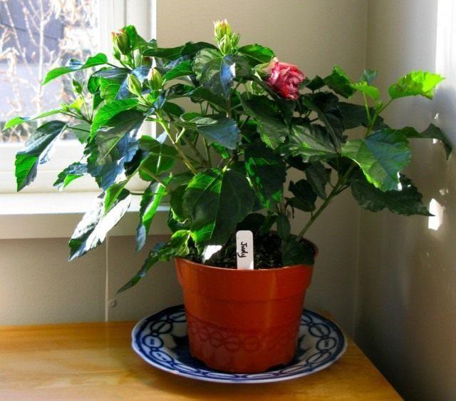 удобрение гуми 20 для комнатных растений