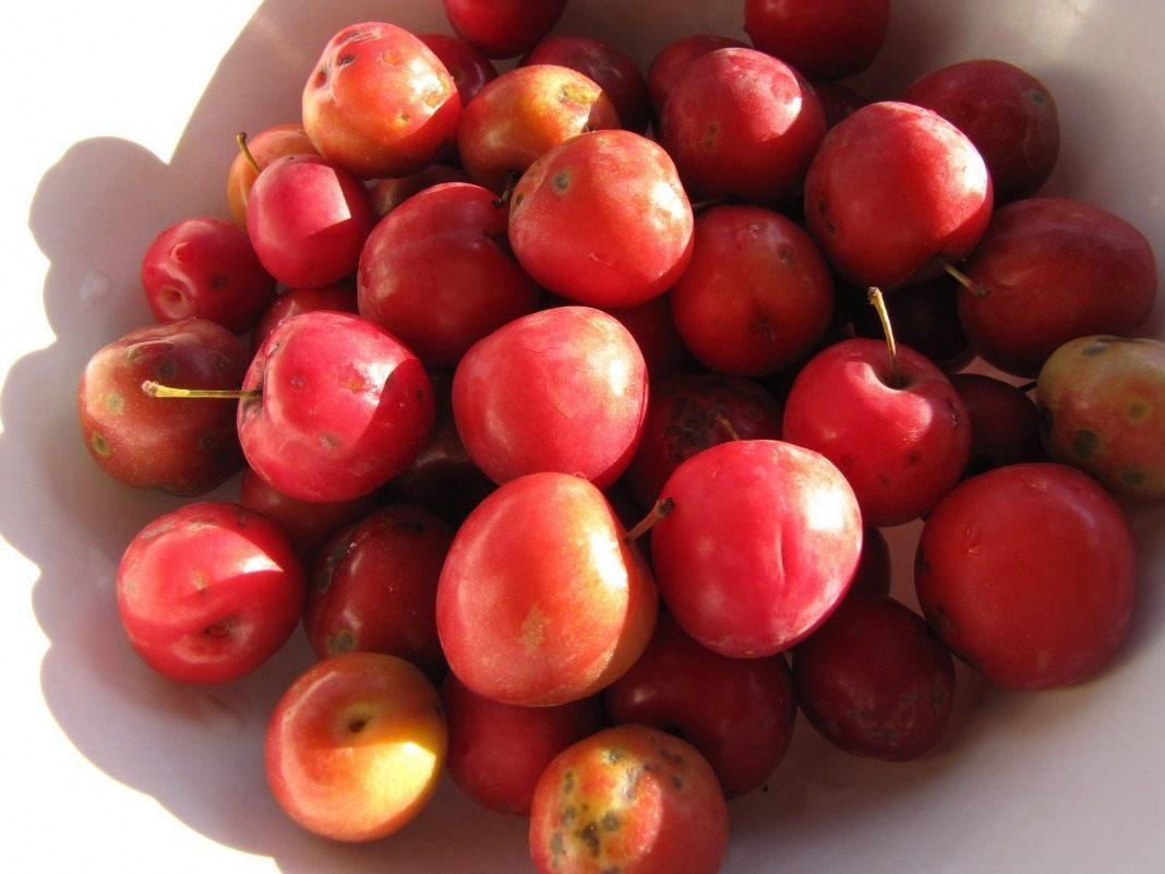 Уход за плодово ягодными культур 5