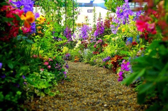 Цветник вдоль дорожки, ведущей к зоне отдыха