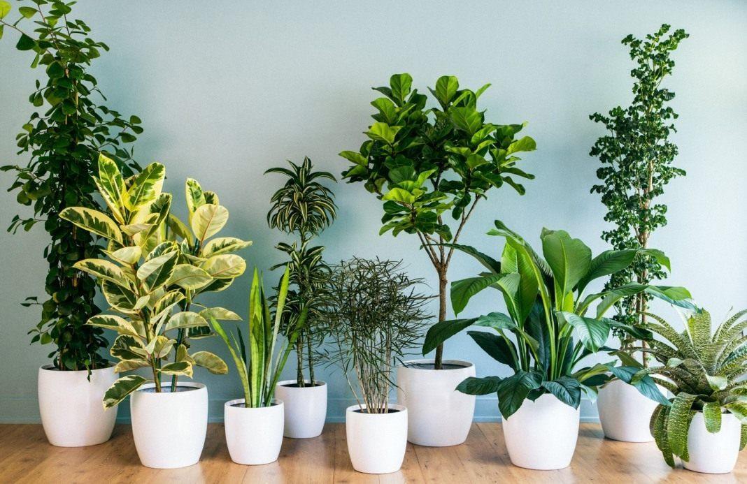 Комнатные нецветущие растения уход 126