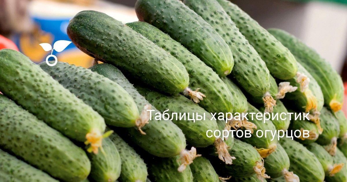Как классифицируются сорта огурцов, особенности выращивания