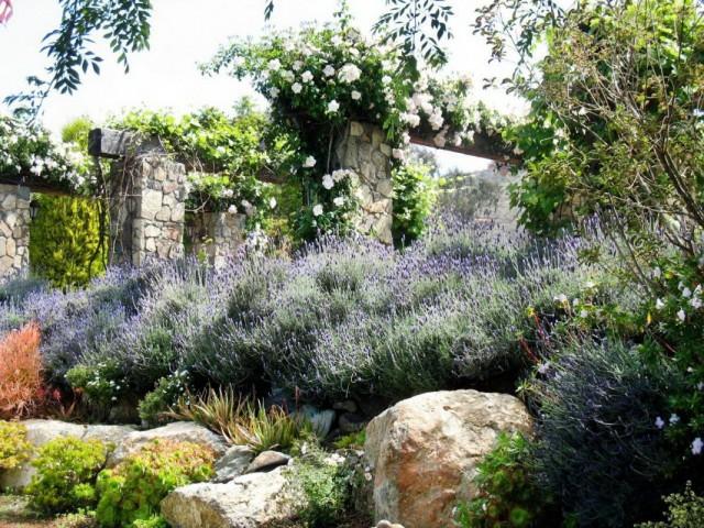 Лаванда в загородном саду французского стиля