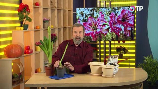 Кандидат сельскохозяйственных наук Николай Фурсов