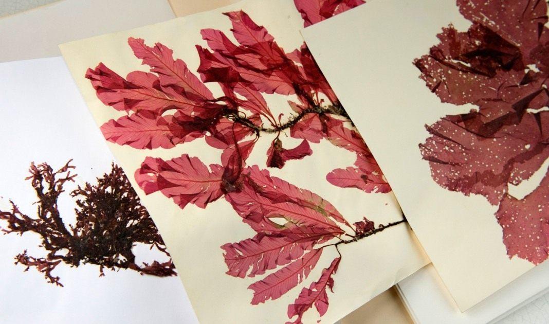 galerie-botanique-3