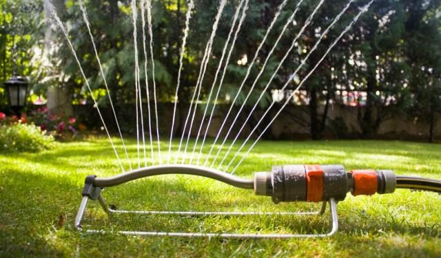 Летом газону требуется регулярные и обильные поливы