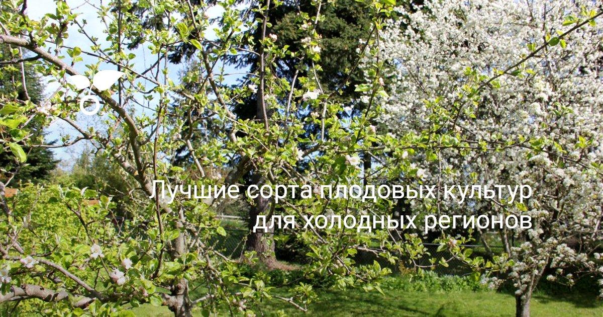 Какие плодовые культуры выращивают в московской области