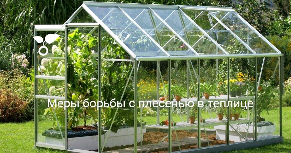 Выращивание грибов в теплице на даче круглый год: технология разведения