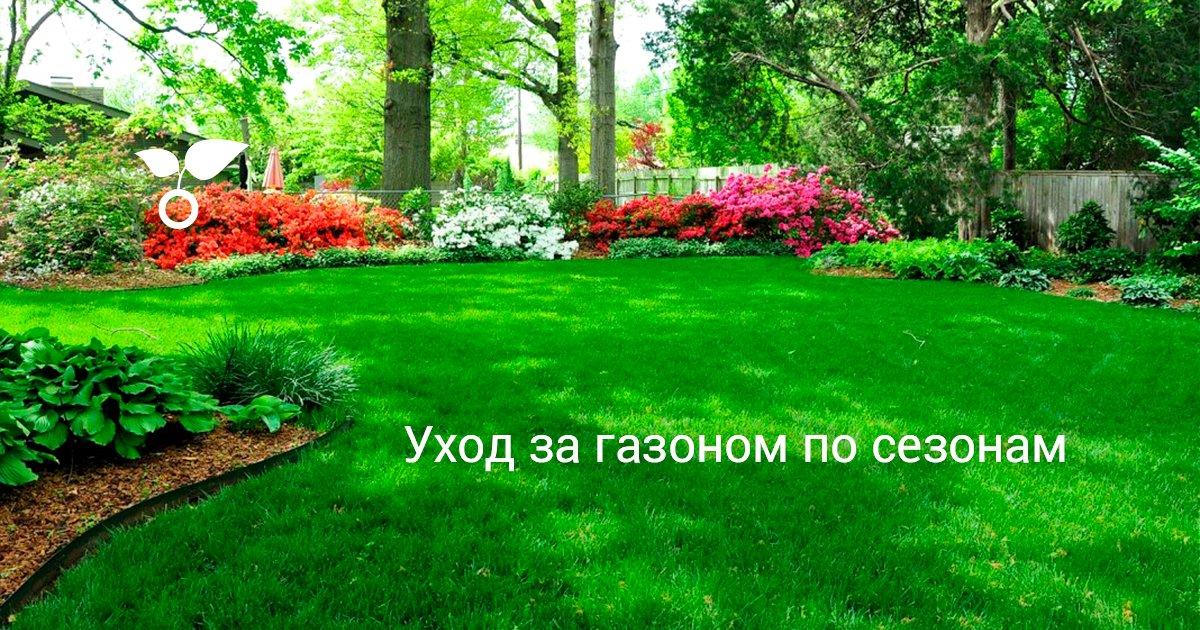 Посадка газона или посев газонной травы осенью