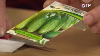 Семена огурцов обычной бумажной упаковке