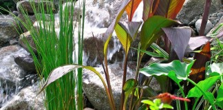 Растения для водоемов