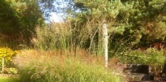 Изгородь из злаков, ограждающих зону отдыха