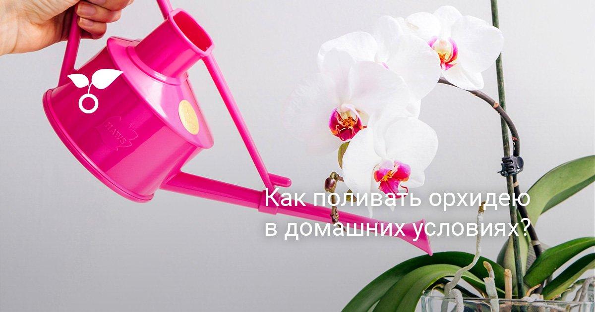 На сколько орхидею ставить в воду