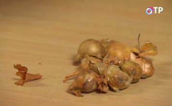 Проведите сортировку купленного или хранящегося дома лука-севка