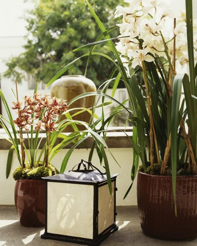Орхидеи с изящными цветками в интерьере дома