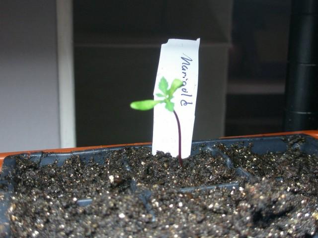 Не всходят семена посеянные на рассаду
