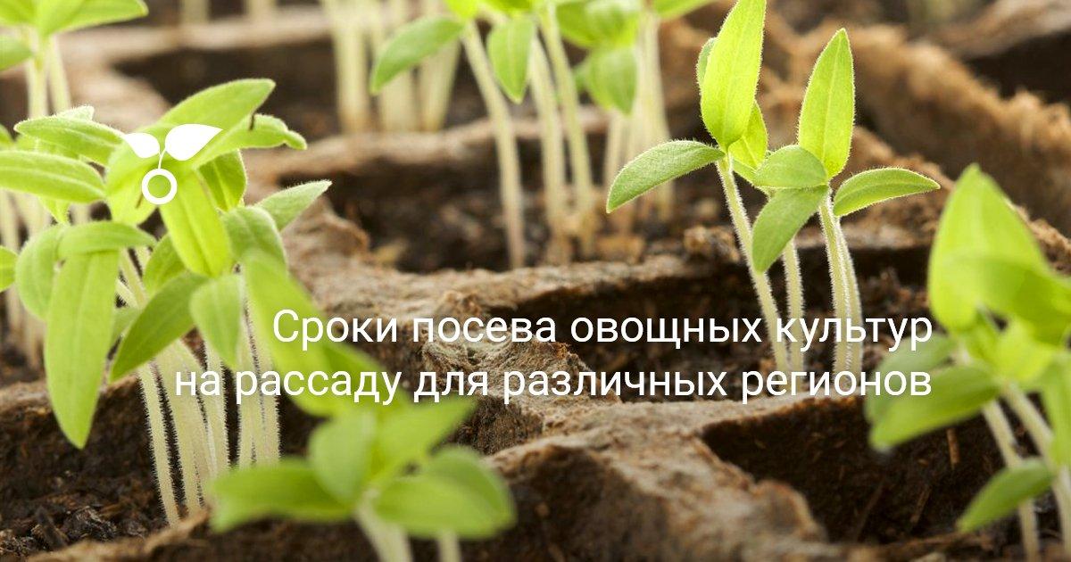 Овощи для открытого грунта в средней полосе