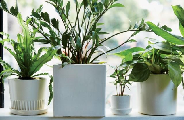 Уход за купленными комнатными декоративными растениями