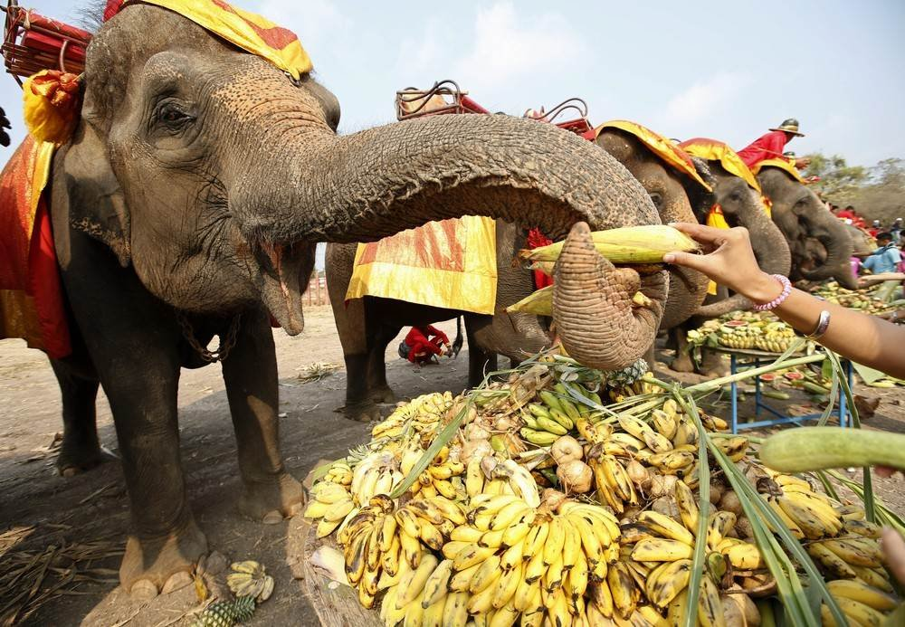 Elephant-Day-1