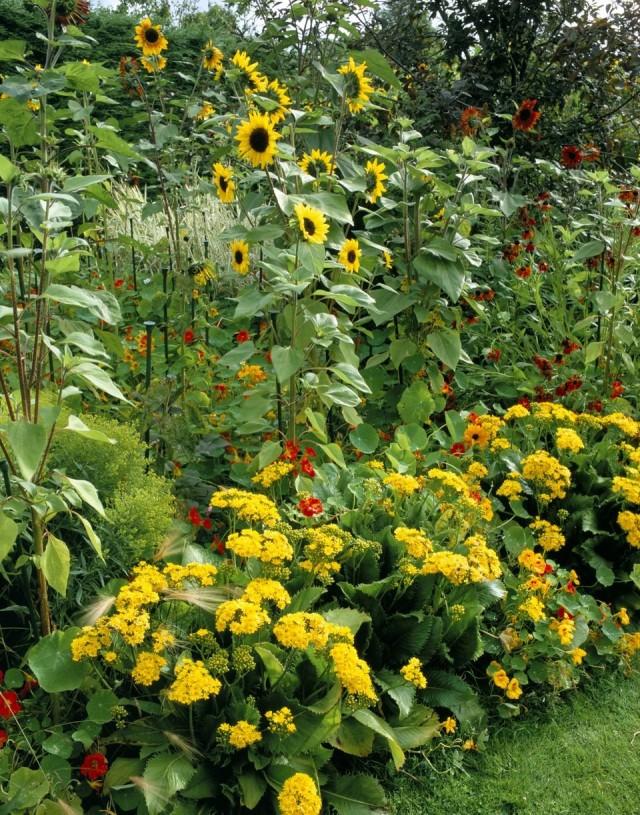 Цветник с подсолнечниками