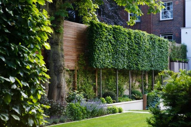 Зелёная изгородь из высокорослых деревьев, посаженных вдоль стены