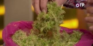 Для стратификации можно использовать мох
