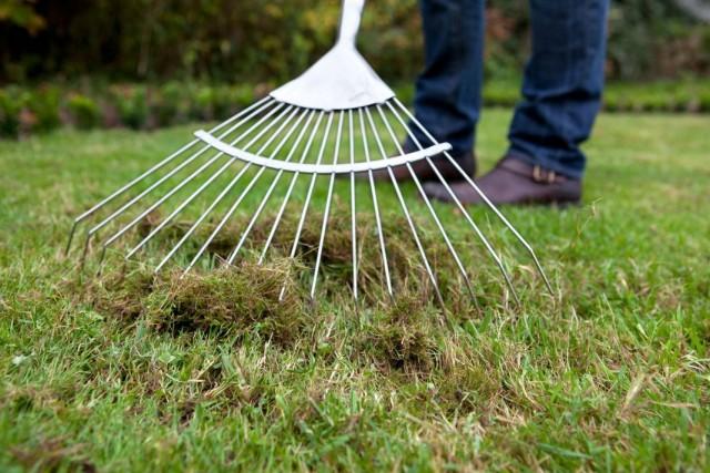 Скарификация - вычесывание старой травы из газона