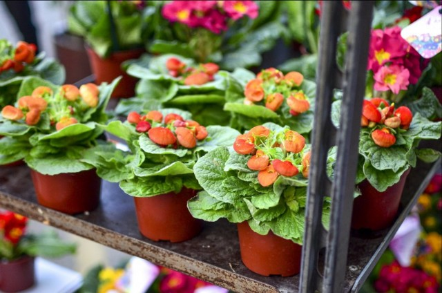 Выбор цветущих растений в магазине